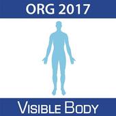 Human Anatomy Atlas 17 (Org.)